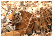 India Safari Tours, Safari Tour India, India Safari Tour Packages, Wildlife Safari Tour in India