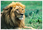 Wildlife Tourism India, India Wildlife Tourism, India Wildlife Tour Package, Wildlife Trip in India